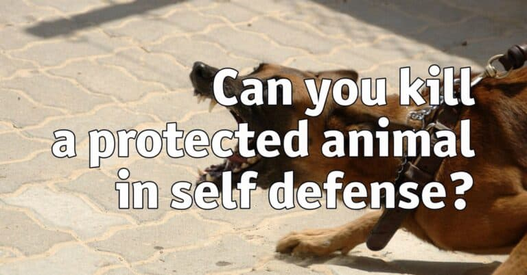 Can you kill a protected animal in self defense?